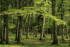 foresta umbra sul gargano