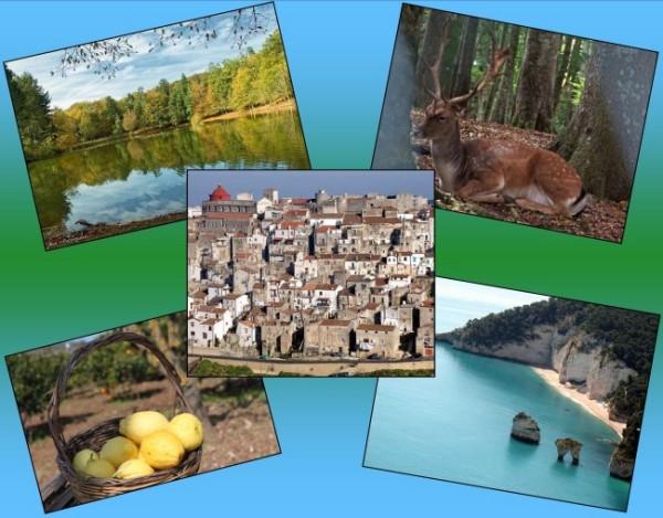 collage escursioni pizzicato