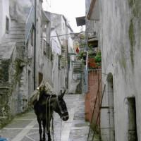 Vacanze sul Gargano: consigli e luoghi da visitare