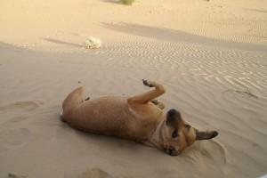 vacanze con animali Puglia